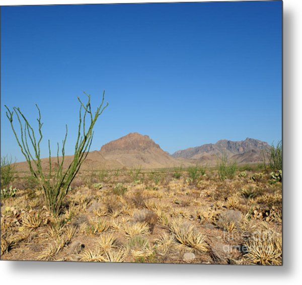 Ocotillo And Mountain Metal Print