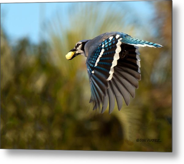 Off To The Nest Metal Print