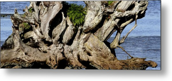 Old Tree  Metal Print by Mary Gaines