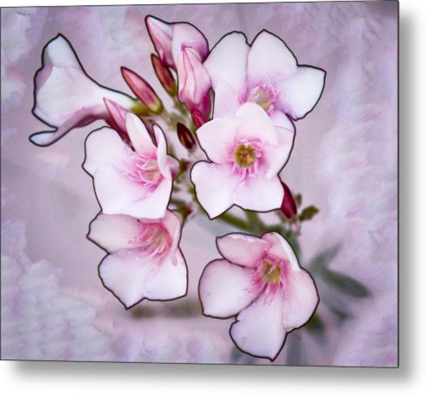 Oleander Blossoms Metal Print by Jim Painter