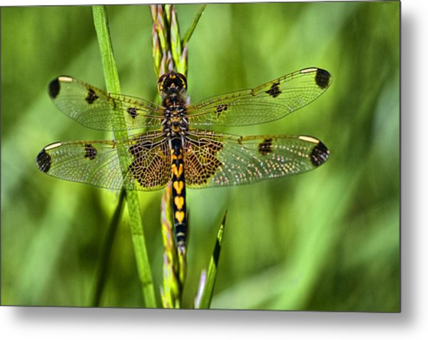 On Delicate Wings Metal Print by Cheryl Cencich