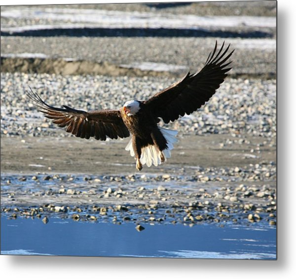 On The Edge Of Glory Metal Print by Carrie OBrien Sibley