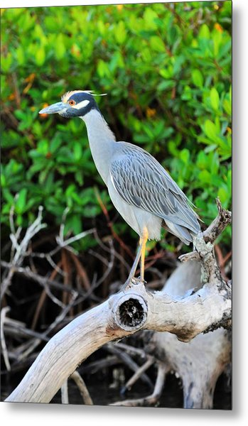 On The Limb Metal Print by Barry R Jones Jr