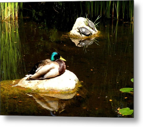 On The Rocks Metal Print by Andrea Cullinane