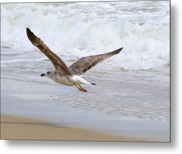 On The Wing At Nags Head Metal Print by Paula Tohline Calhoun