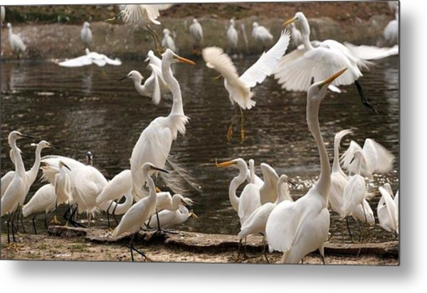 On The Wing Metal Print by Bret Worrell
