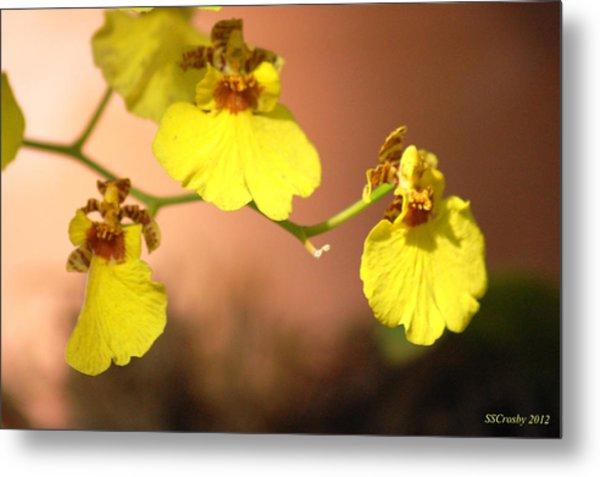 Oncidium Goldiana Orchid Metal Print