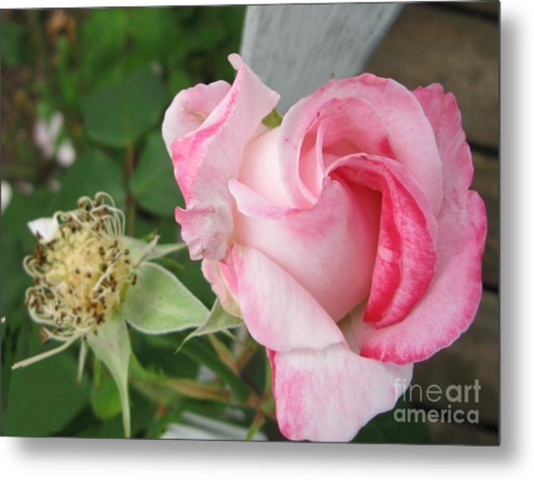 One Arriving And One Leaving Metal Print by Sandra Maddox