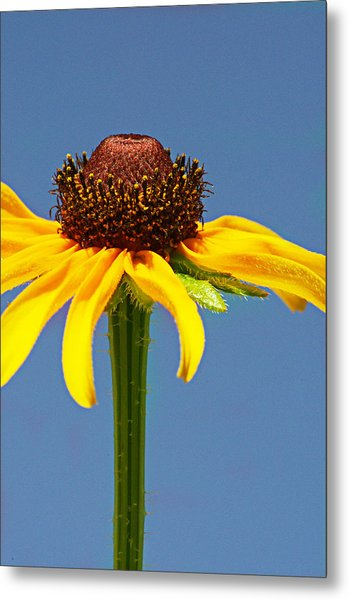 One Lone Flower Metal Print by Michelle Armstrong