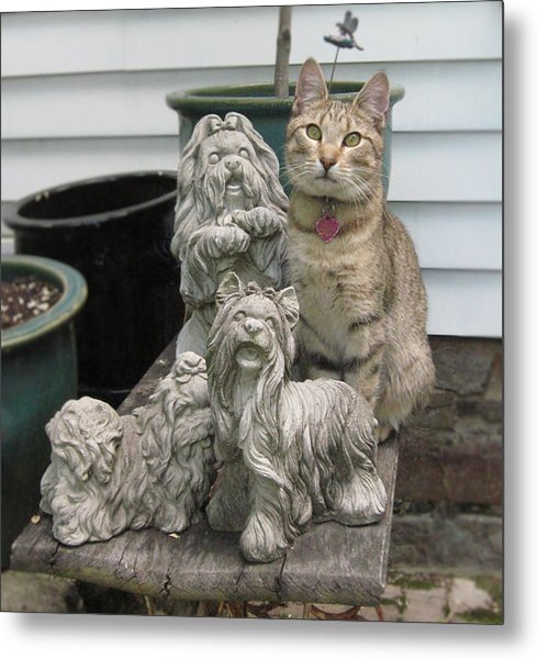 One Of These Things Is Not Like The Other Metal Print by Tina Ann Byers