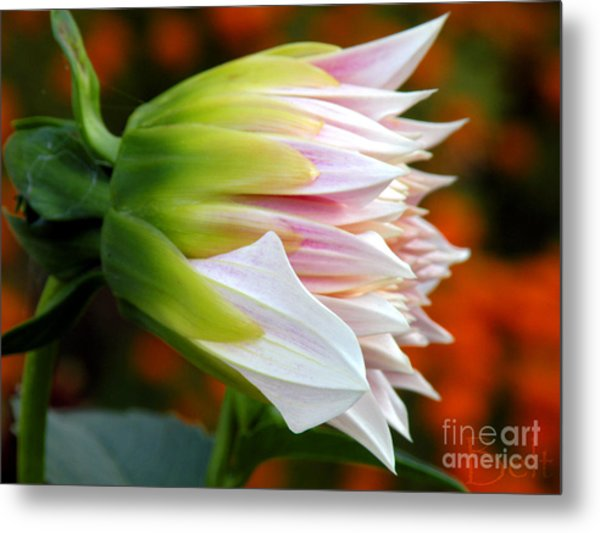 Open For Autumn Metal Print by Christine Belt