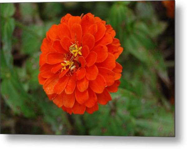 Orange Metal Print by Beverly Hammond