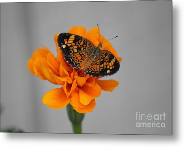 Orange Butterfly 2 Metal Print
