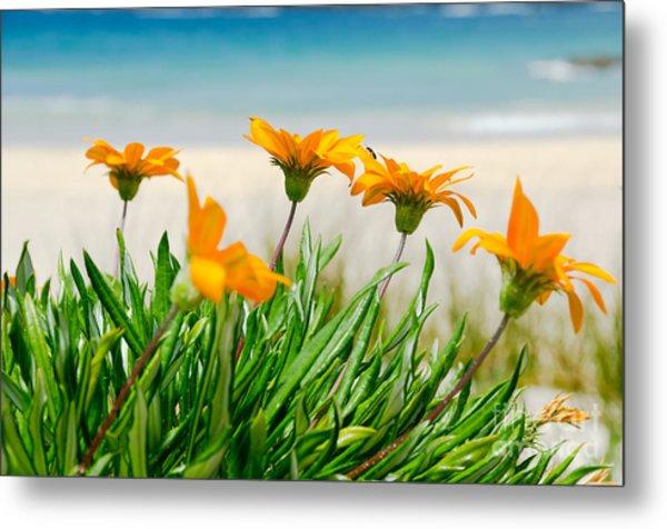 Orange Flowers On The Sunny Ocean Beach. Metal Print