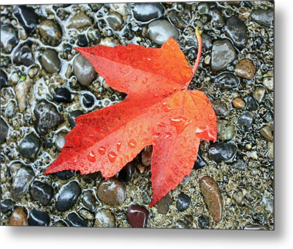 Orange Leaf Metal Print