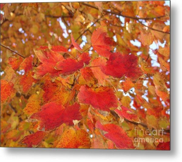 Orange Leaves 4 Metal Print