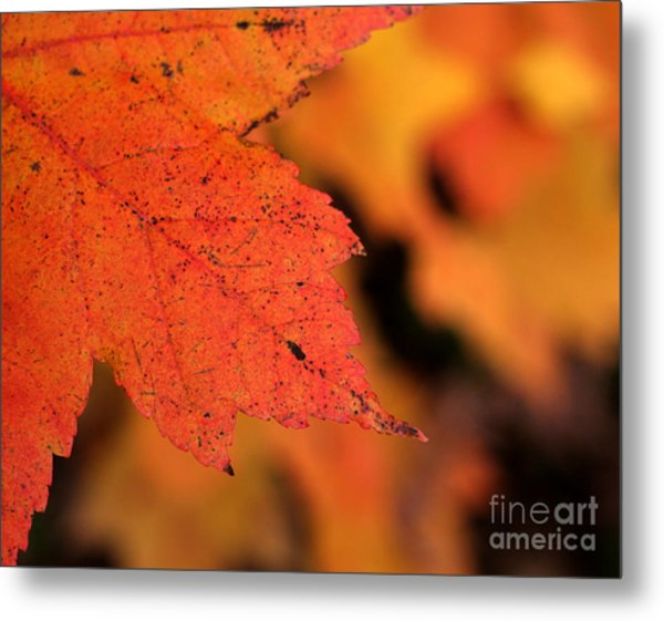 Orange Maple Leaf Metal Print by Chris Hill