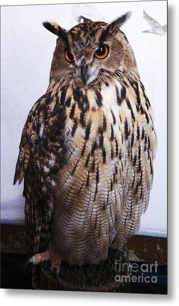 Orange Owl Eyes Metal Print