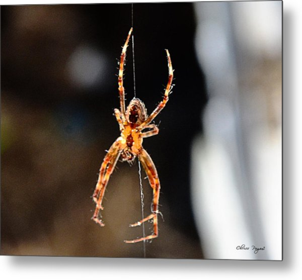 Orange Spider Metal Print