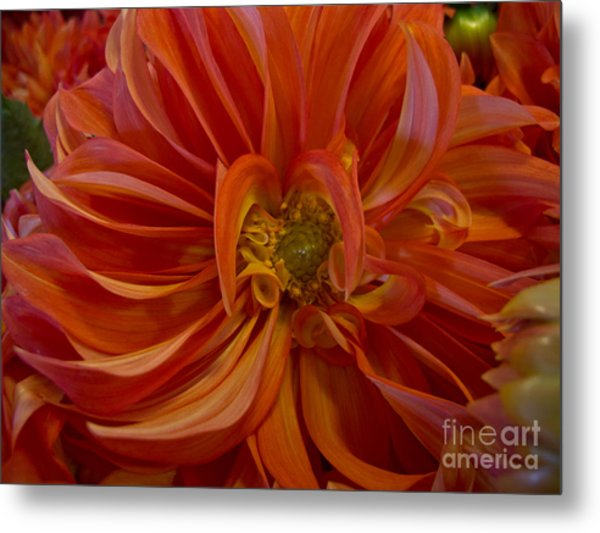 Orange You Happy Metal Print