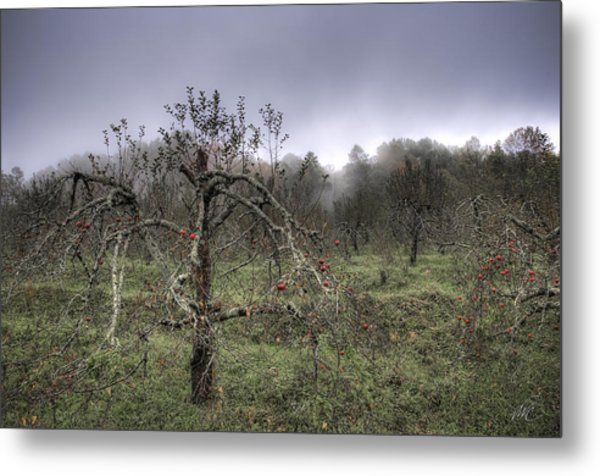Orchard At Altapass Metal Print by Williams-Cairns Photography LLC