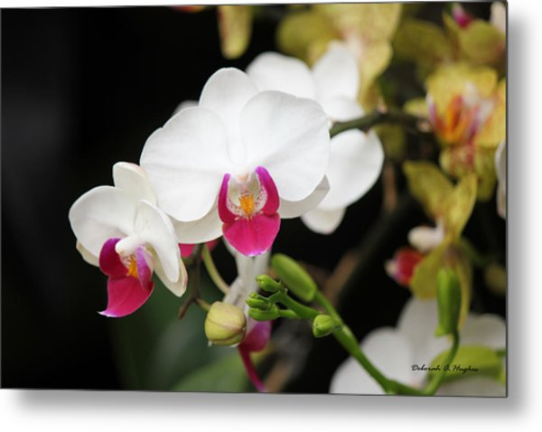 Orchid Buds Metal Print