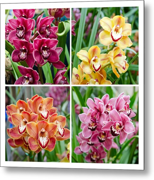 Metal Print featuring the photograph Orchid Collage by Margaret Pitcher