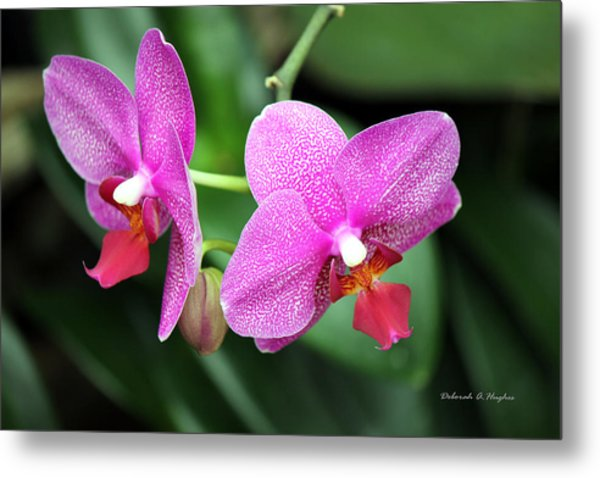 Orchid Purple Metal Print