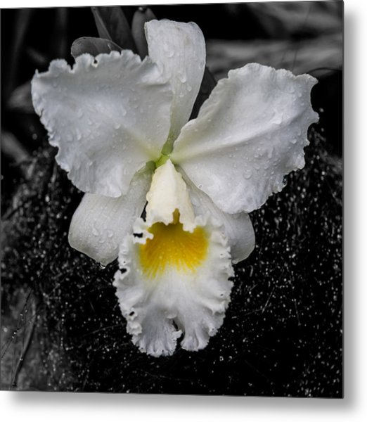 Orchid Shower Metal Print