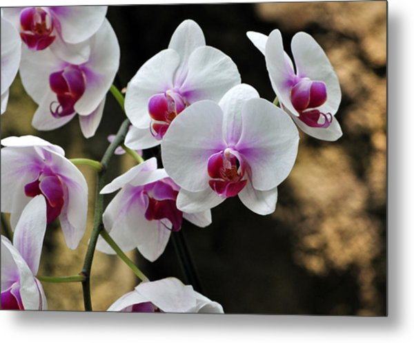 Orchids For Your Day Metal Print by Timothy Johnson