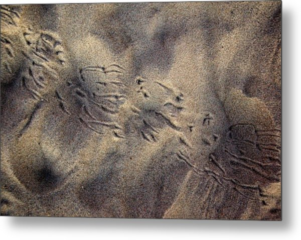 Orithography Metal Print by George Crawford