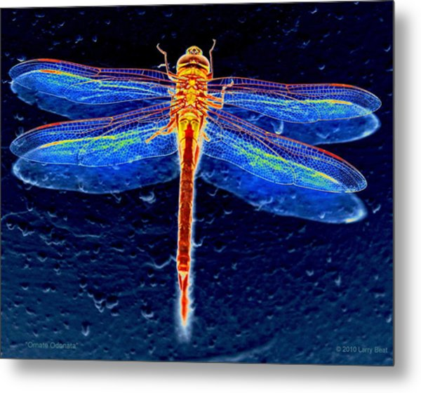 Ornate Odonata Metal Print