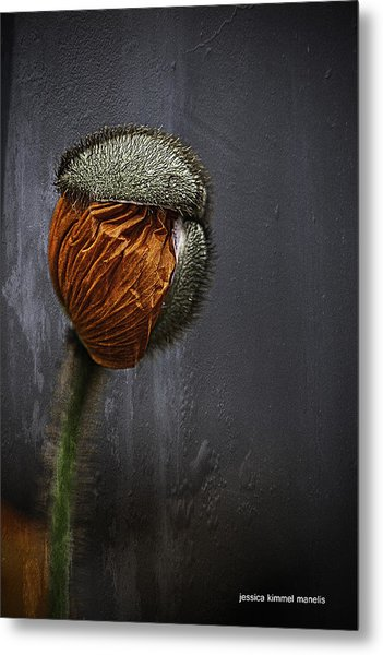 Out Of Darkness Grows Flowers Metal Print by Jessica Manelis