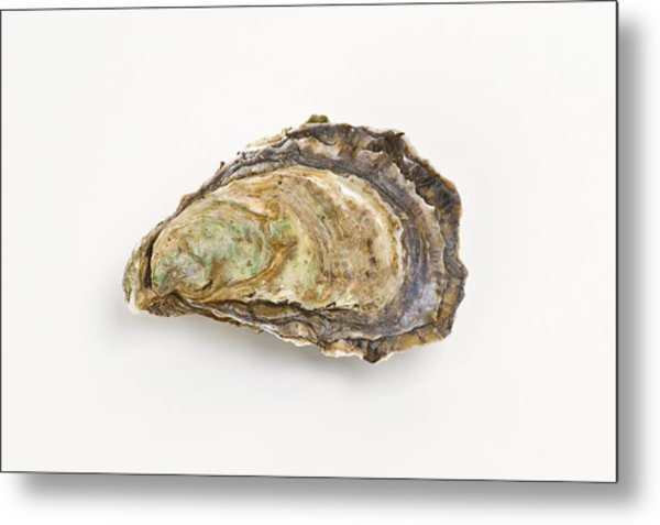 Pacific Oyster Metal Print by David Nunuk