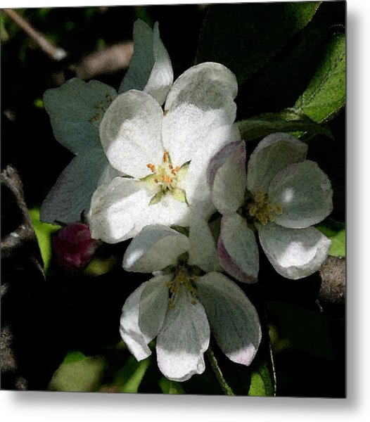 Painted Blossoms Metal Print
