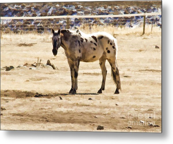 Painted Horses II Metal Print
