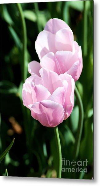 Pair Of Pink Tulips Metal Print