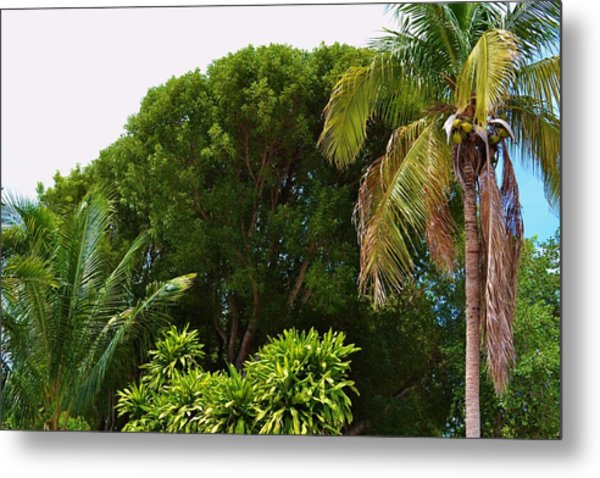 palm tree Key west Metal Print by Josee Dube