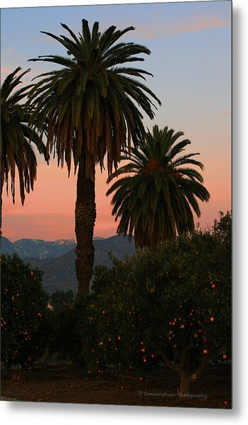Palm Trees And Orange Trees Metal Print