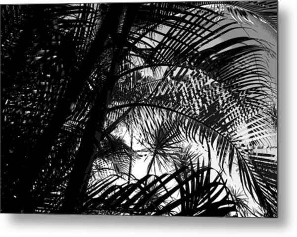 Palm Trees Metal Print by Colleen Cannon