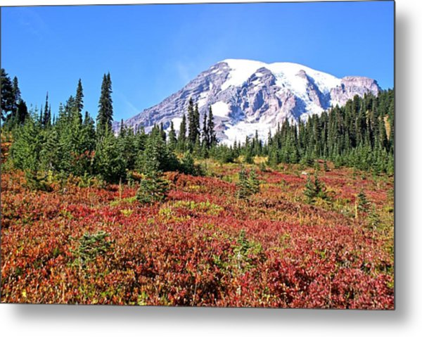 Paradise In Fall On Mt. Rainier  Metal Print