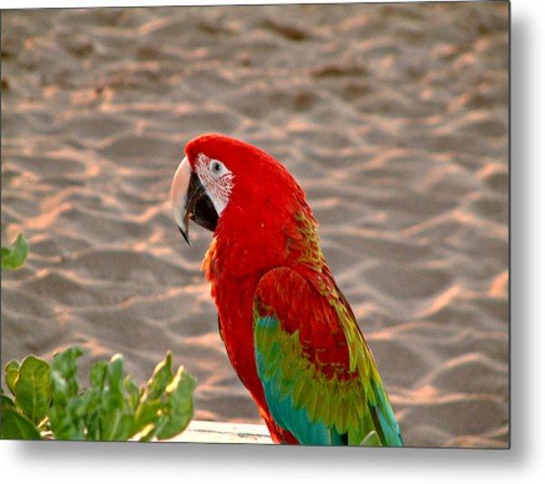 Parrot In Maui Metal Print