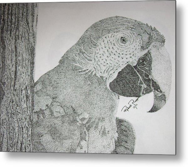 Parrot Metal Print by Robert Plopper