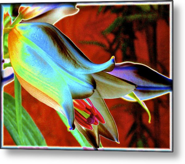 Party Lily Closd Metal Print