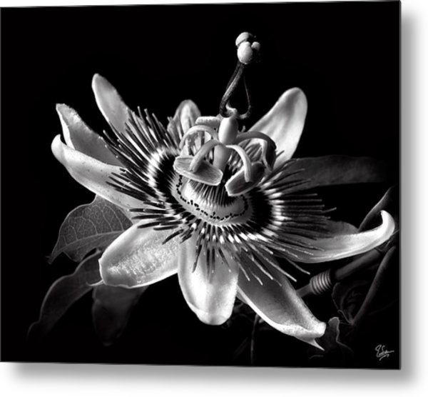 Passion Flower In Black And White Metal Print
