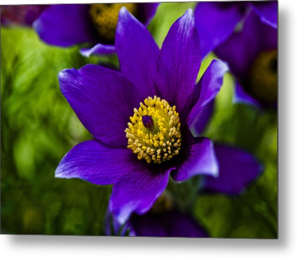 Passion For Purple Metal Print