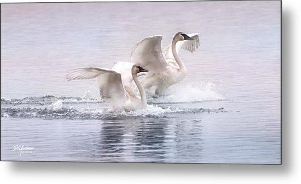 Pastel Swans Metal Print