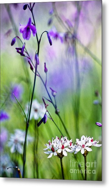 Pastel Wildflowers Metal Print by David Lade