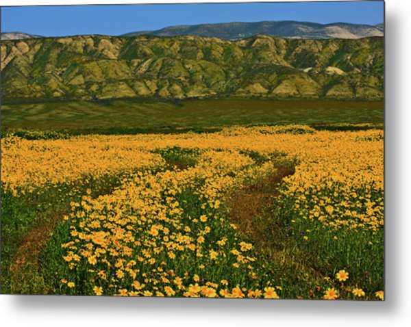 Path Through The Wildflowers Metal Print