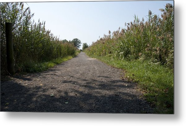 Path To The Bay Metal Print